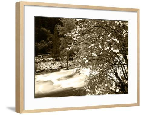 Pacific Dogwood Tree, Merced River, Yosemite National Park, California, USA-Adam Jones-Framed Art Print