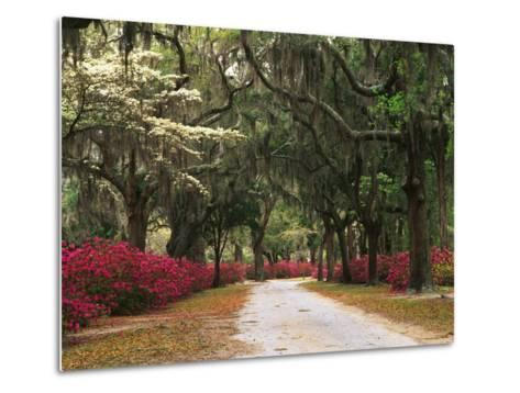 Road Lined with Azaleas and Live Oaks, Spanish Moss, Savannah, Georgia, USA-Adam Jones-Metal Print