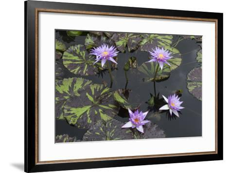 Lily Pond with Water Lilies, New Orleans Botanical Garden, New Orleans, Louisiana, USA-Jamie & Judy Wild-Framed Art Print