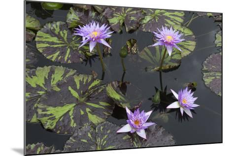 Lily Pond with Water Lilies, New Orleans Botanical Garden, New Orleans, Louisiana, USA-Jamie & Judy Wild-Mounted Photographic Print