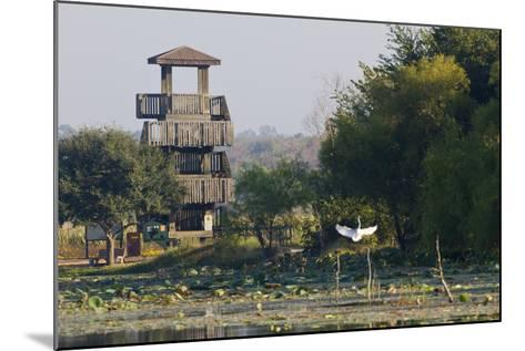 Brazos Bend State Park and Wetlands Near Houston, Texas, USA-Larry Ditto-Mounted Photographic Print