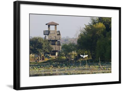Brazos Bend State Park and Wetlands Near Houston, Texas, USA-Larry Ditto-Framed Art Print