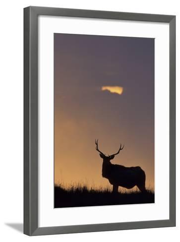 Sunset, Tule Elk Wildlife, Point Reyes National Seashore, California, USA-Gerry Reynolds-Framed Art Print