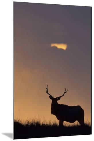 Sunset, Tule Elk Wildlife, Point Reyes National Seashore, California, USA-Gerry Reynolds-Mounted Photographic Print