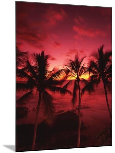 View Palm Trees on Beach, Big Islands, Kona, Hawaii, USA-Stuart Westmorland-Mounted Photographic Print