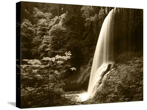 View of Middle North Falls, Silver Falls State Park, Oregon, USA-Adam Jones-Stretched Canvas Print