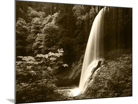 View of Middle North Falls, Silver Falls State Park, Oregon, USA-Adam Jones-Mounted Photographic Print