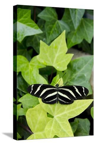 Wings of Mackinac Butterfly Conservatory and Garden, Mackinac Island, Michigan, USA-Cindy Miller Hopkins-Stretched Canvas Print