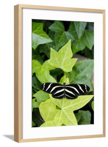 Wings of Mackinac Butterfly Conservatory and Garden, Mackinac Island, Michigan, USA-Cindy Miller Hopkins-Framed Art Print