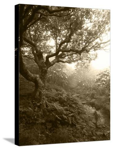 Craggy Gardens, Pisgah National Forest, North Carolina, USA-Adam Jones-Stretched Canvas Print