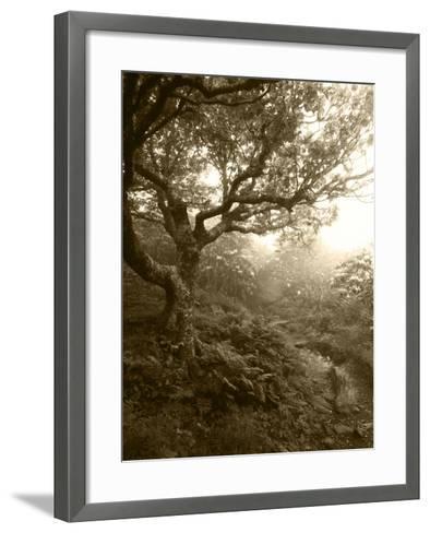 Craggy Gardens, Pisgah National Forest, North Carolina, USA-Adam Jones-Framed Art Print