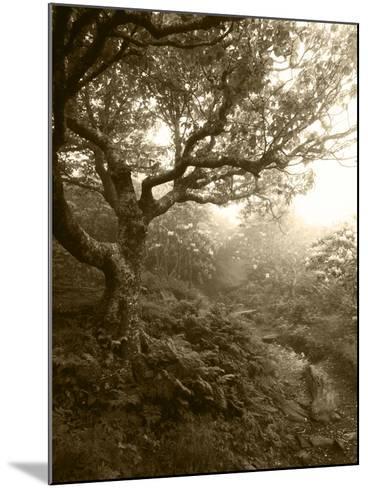 Craggy Gardens, Pisgah National Forest, North Carolina, USA-Adam Jones-Mounted Photographic Print