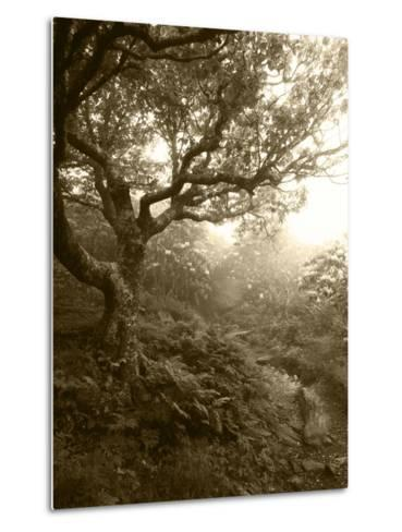 Craggy Gardens, Pisgah National Forest, North Carolina, USA-Adam Jones-Metal Print