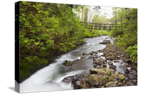 Necarney Creek, and Suspension Bridge, Oswald West State Park, Oregon, USA-Jamie & Judy Wild-Stretched Canvas Print