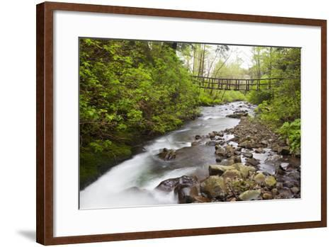 Necarney Creek, and Suspension Bridge, Oswald West State Park, Oregon, USA-Jamie & Judy Wild-Framed Art Print