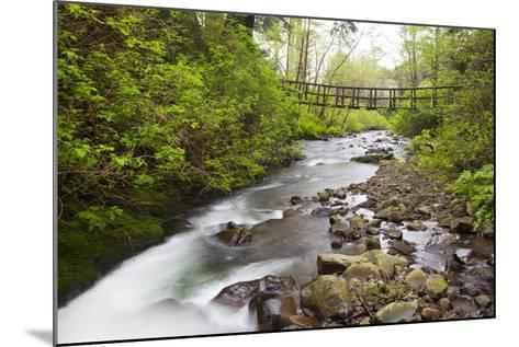 Necarney Creek, and Suspension Bridge, Oswald West State Park, Oregon, USA-Jamie & Judy Wild-Mounted Photographic Print
