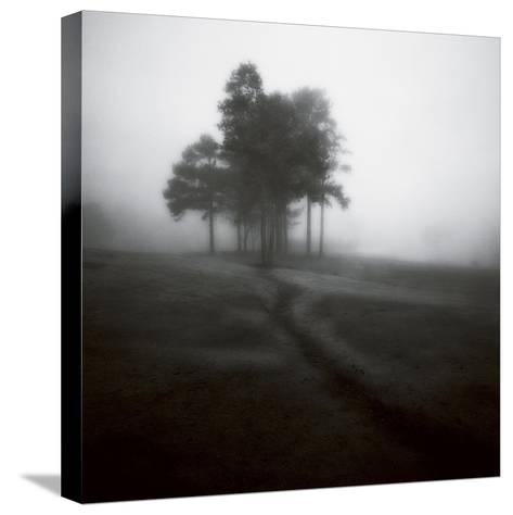 Fog Tree Study 1-Jamie Cook-Stretched Canvas Print