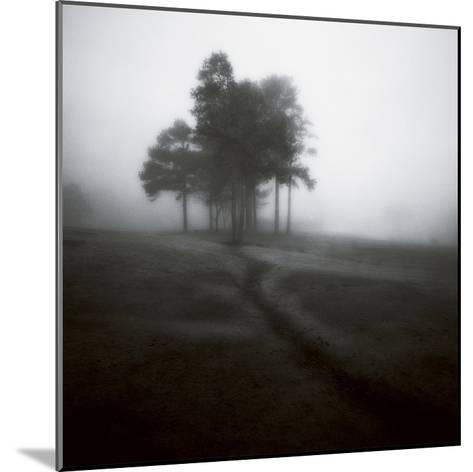 Fog Tree Study 1-Jamie Cook-Mounted Premium Photographic Print