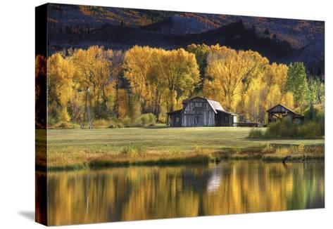 Aspen Trees with Barn-Jamie Cook-Stretched Canvas Print