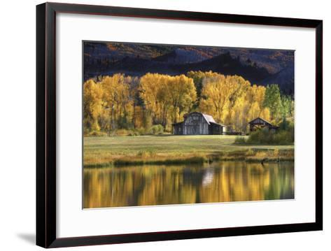 Aspen Trees with Barn-Jamie Cook-Framed Art Print