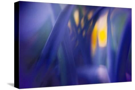 Jangal-WTN Photography-Stretched Canvas Print