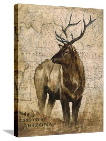 Native Spirit 2-Elizabeth Hope-Stretched Canvas Print