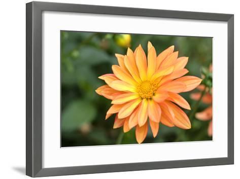 Orange Burst-Ross Gordon-Framed Art Print