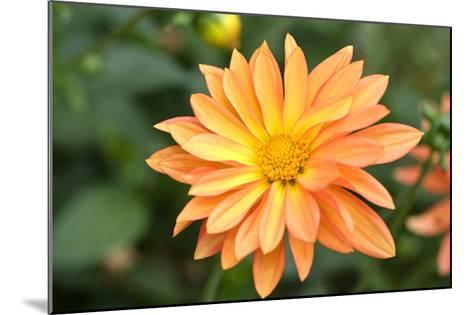 Orange Burst-Ross Gordon-Mounted Premium Photographic Print