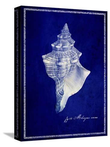 Conch Shell-GI ArtLab-Stretched Canvas Print