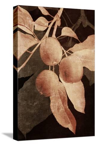 Hanging Apples I-Thea Schrack-Stretched Canvas Print