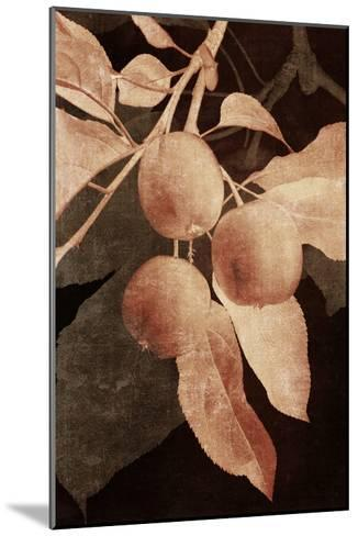 Hanging Apples I-Thea Schrack-Mounted Premium Photographic Print