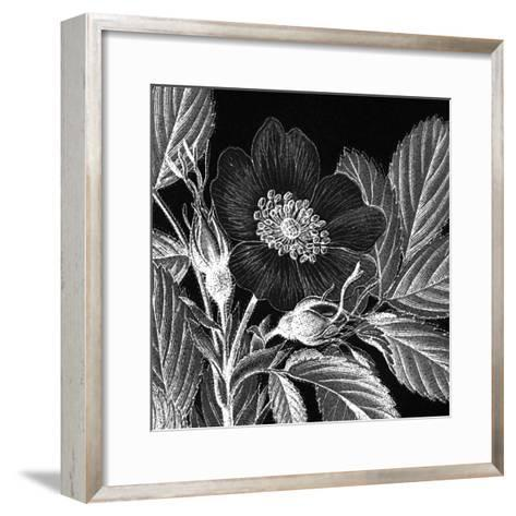 Rosa Pomifera-Thea Schrack-Framed Art Print