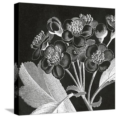 Mespilus Dxyacantha-Thea Schrack-Stretched Canvas Print