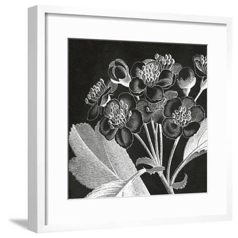 Mespilus Dxyacantha-Thea Schrack-Framed Art Print