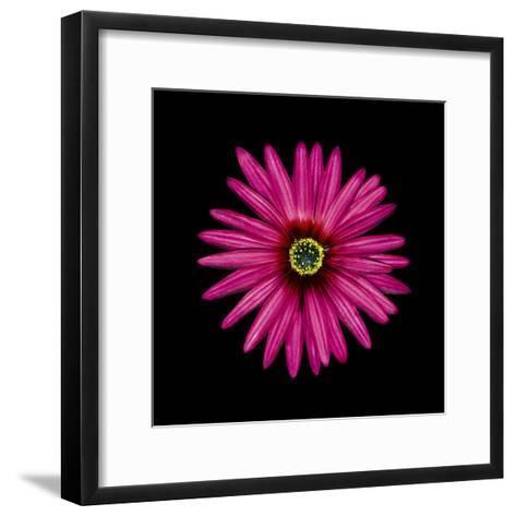 Pink Daisy-JoSon-Framed Art Print