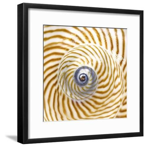 Sea Shelll Abst No.20-Shams Rasheed-Framed Art Print