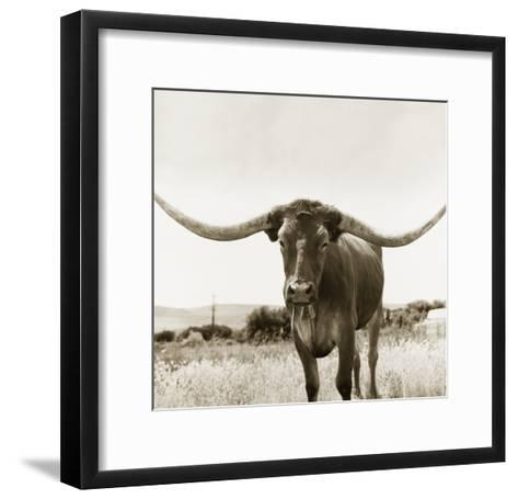 Longhorn-TM Photography-Framed Art Print