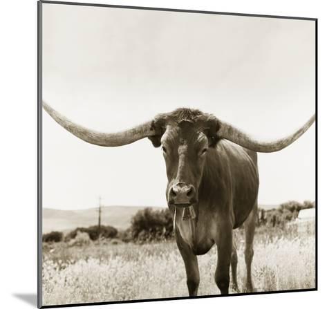 Longhorn-TM Photography-Mounted Premium Photographic Print