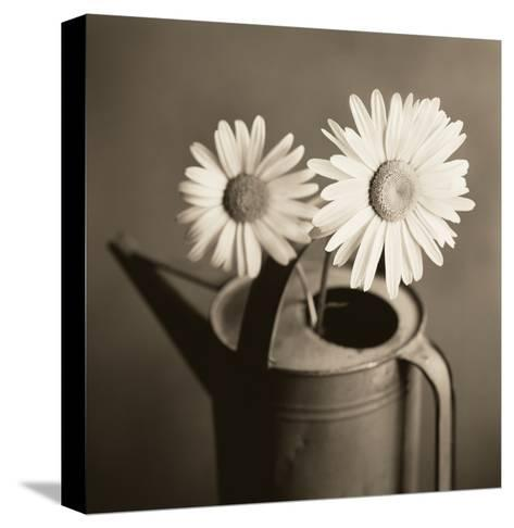 Daisies in Can-TM Photography-Stretched Canvas Print