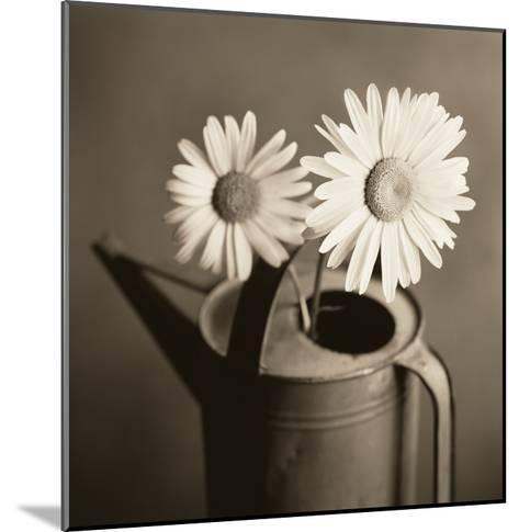 Daisies in Can-TM Photography-Mounted Premium Photographic Print