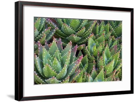 Aloe 1-PhotoDF-Framed Art Print