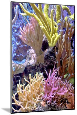 Nature Series 823-PhotoDF-Mounted Premium Photographic Print