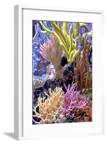 Nature Series 823-PhotoDF-Framed Art Print