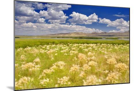 Nature Series 838-PhotoDF-Mounted Premium Photographic Print