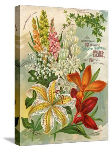 Collection of 10 Beautiful Summer Flowering Bulbs and Lillies--Stretched Canvas Print