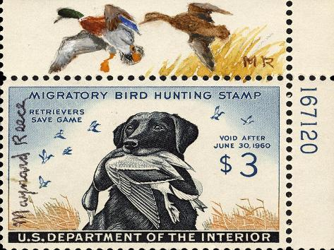National Postal Museum: 3 Dollar Duck Stamp Remarque--Stretched Canvas Print