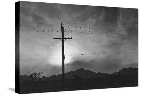 Birds on Wire, Evening, Manzanar Relocation Center', 1943 by Ansel Adams--Stretched Canvas Print
