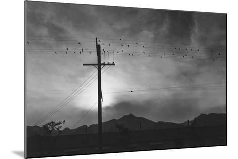 Birds on Wire, Evening, Manzanar Relocation Center', 1943 by Ansel Adams--Mounted Photo