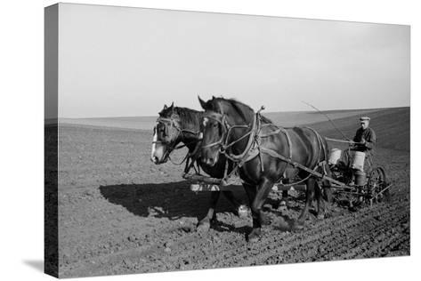 Two Large Work Horses Pull the Farmer and His Corn Seed Drill in Iowa, 1940s--Stretched Canvas Print