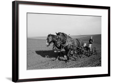 Two Large Work Horses Pull the Farmer and His Corn Seed Drill in Iowa, 1940s--Framed Art Print
